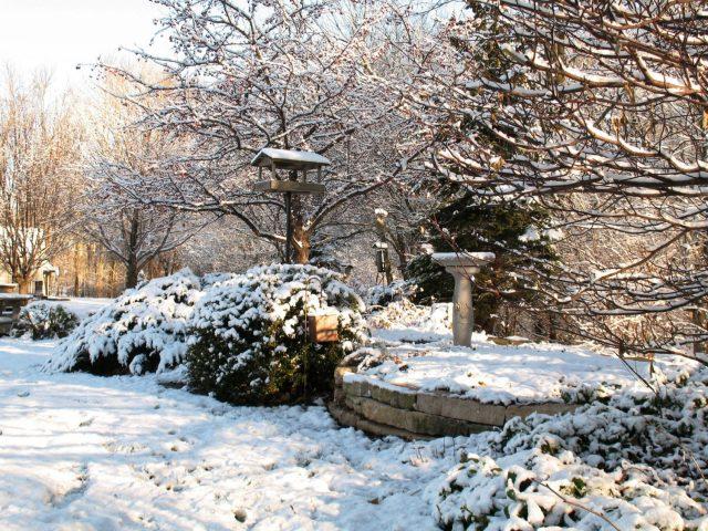 Backyard Landscape Planting in Winter in Green Bay