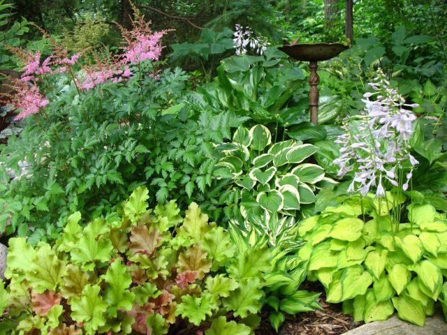 Backyard Landscape Planting in Green Bay