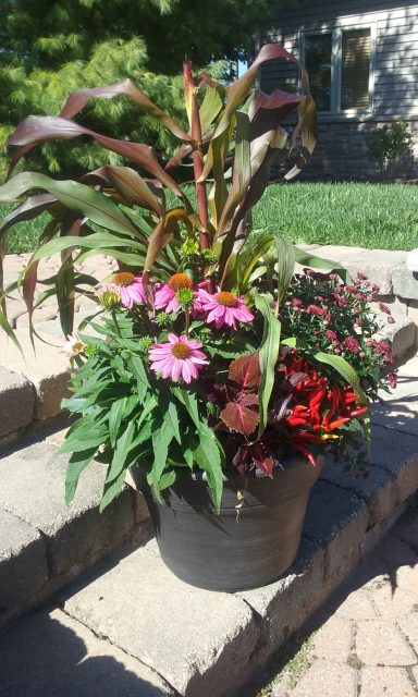 Seasonal Color added to a Planter around a Patio in Green Bay