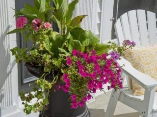 Seasonal Color added to a Planter at a Front Entrance in Appleton
