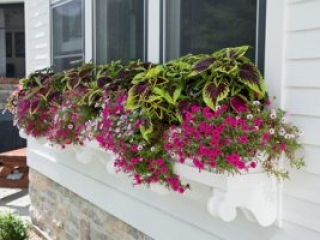 Season Color added to a Window Planter in Appleton