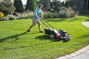 Lawn Care for Client in Green Bay
