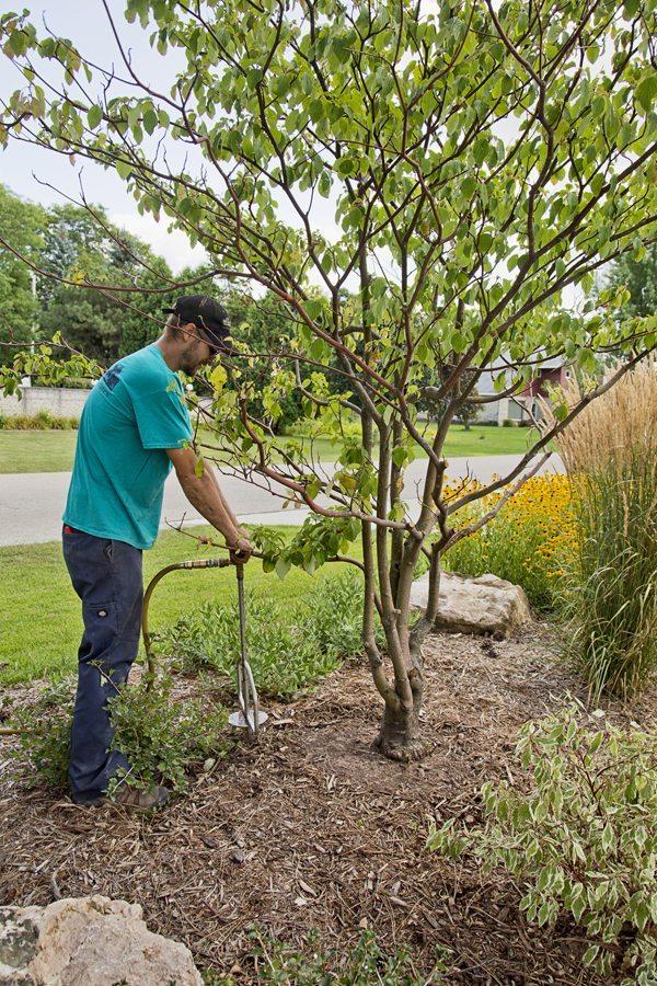 Sick Tree Treatment in Appleton