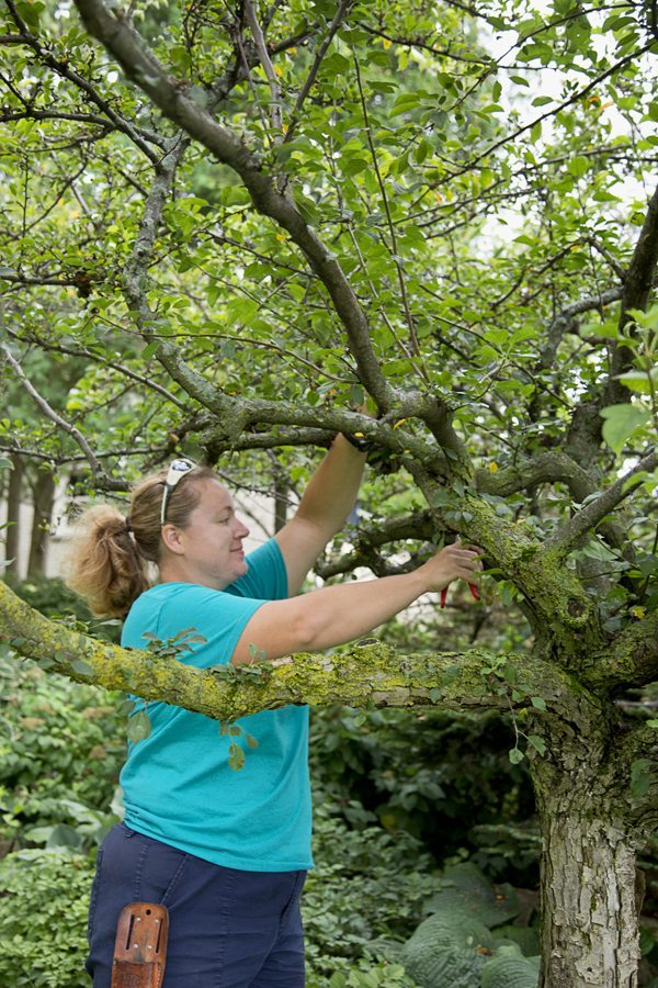 Tree Pruning in Green Bay