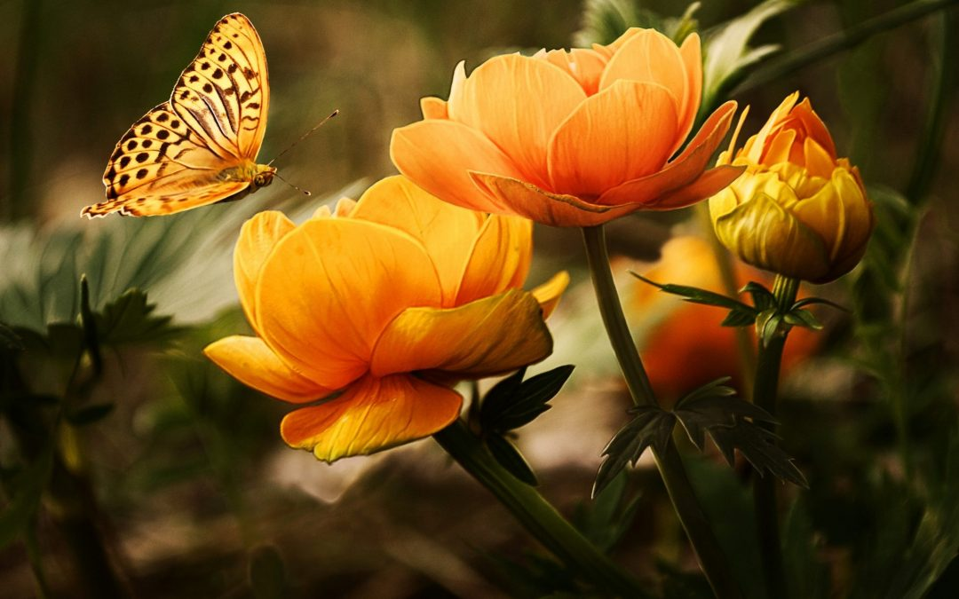 Pollinators and How to Attract Them to Your Garden