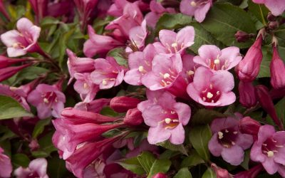 Landscape Shrubs: A Fresh Take