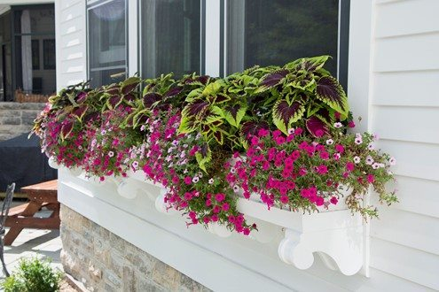 Beautiful Window Planter will colorful annuals to brighten up the landscaping at an Appleton Home