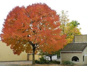 Ash Tree - Green Bay WI, Appleton, WI
