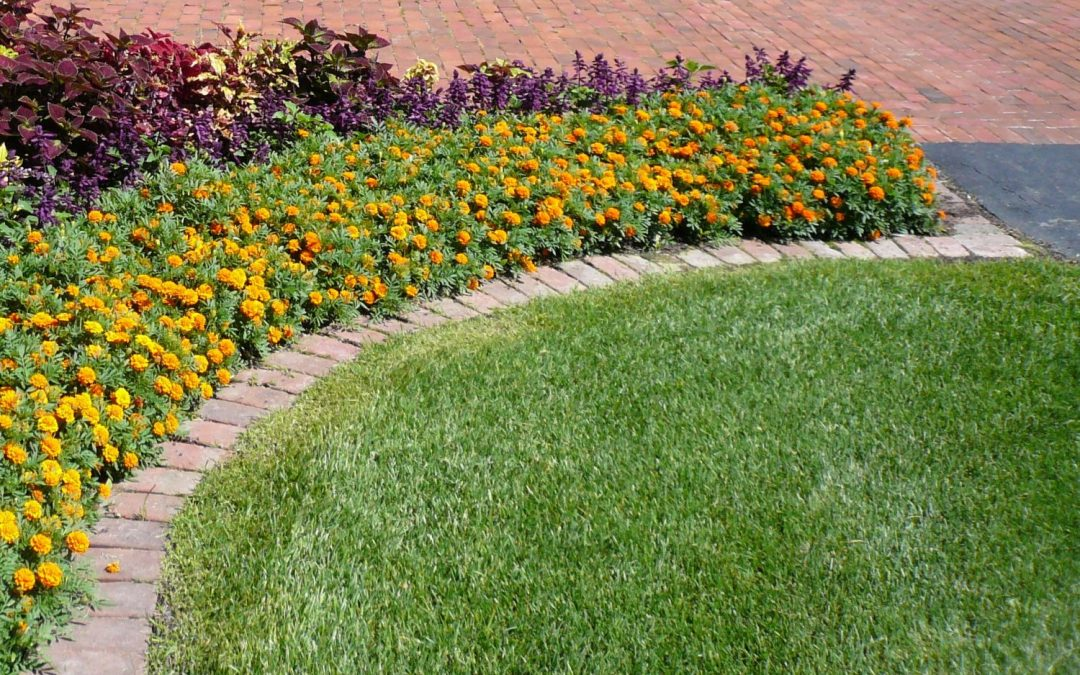 Which Landscape Edging is Best?