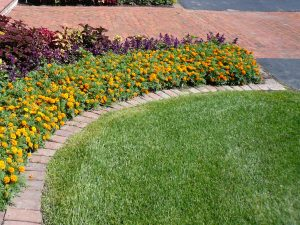 Which Landscape Edging is Best