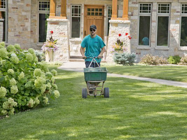 Landscaping worker pushing a fertilizer dispenser on a residential lawn.