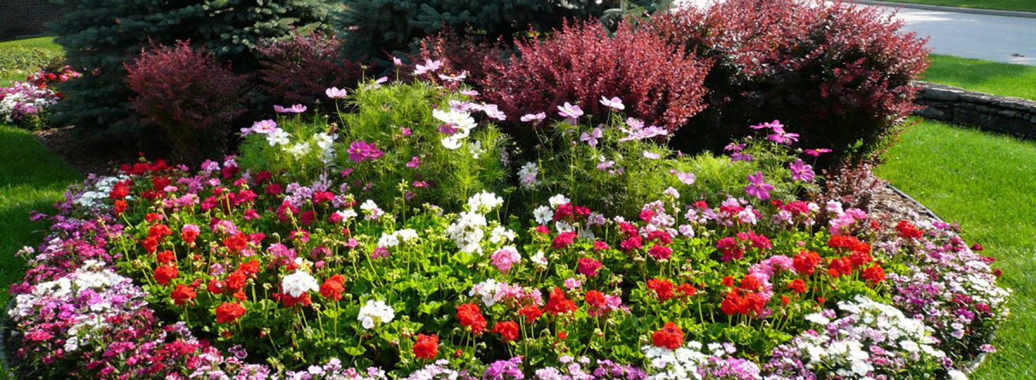 A flower garden with many types and colors of flowers in the middle of a grassy lawn.