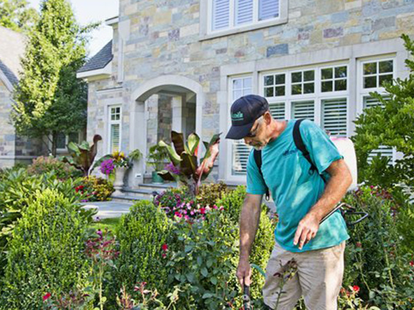 A landscaping worker puts down fertilizer in a flower bed.