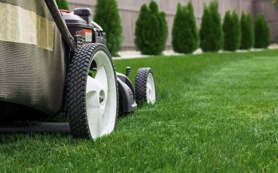 How To Extend The Life Of Your Yard