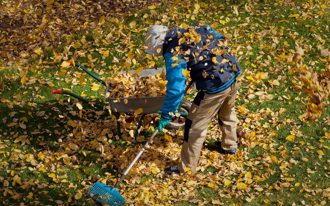 Need Lawn Service In The Fall?